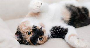 Five Reasons why you should Pet a Cat in your Home