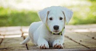Wish to Pet a Dog at Home? Here are Five Things you Must be Sure